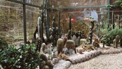 Cactus shop.