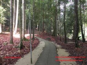 Walk path.