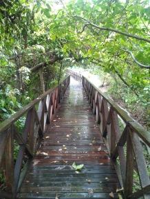 Wooden walk path.