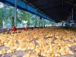 Duck farm.