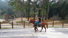 Horse ride on the new track.