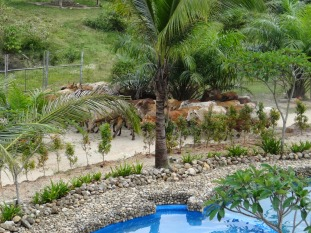 Cow beside the resort.