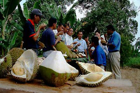 Durian eating.