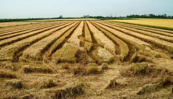 Surrounding of paddy fields.