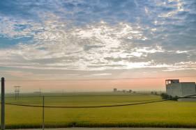 Vast paddy fields.