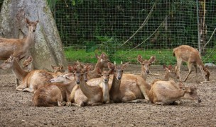 Deer farm.
