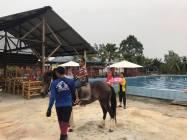 Firefly Park Resort - 13