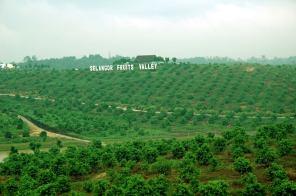 Selangor Fruits Valley - 4