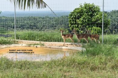 Selangor Fruits Valley - Taman Rusa 4