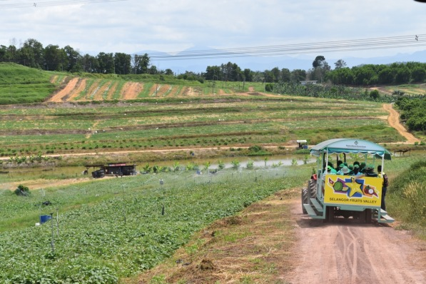 Selangor Fruits Valley - Trem 8